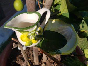 Džbánik na citrónovú šťavu LIMONES