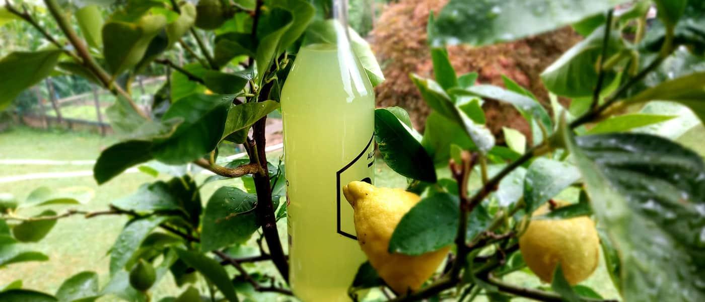 Limoncello - recept